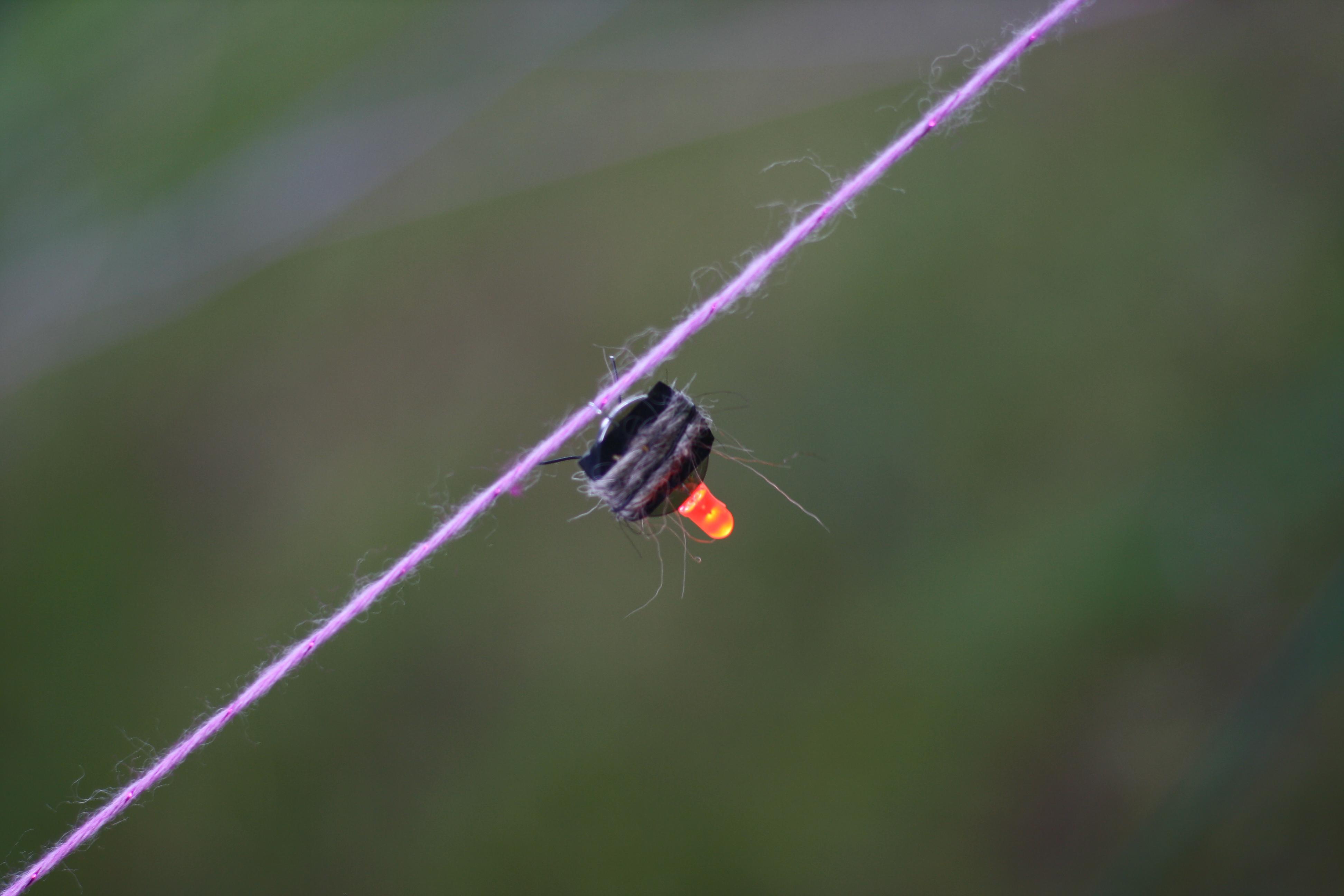biolum bogar - 04